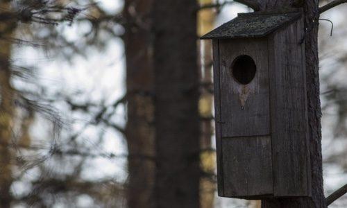Fågelholk. Foto: Erik Hansson